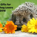 Best Gifts for Hedgehog Lovers